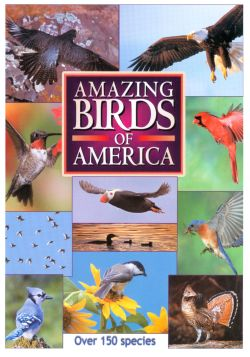 Amazing Birds of America (1999) - Trailers, Reviews, Synopsis