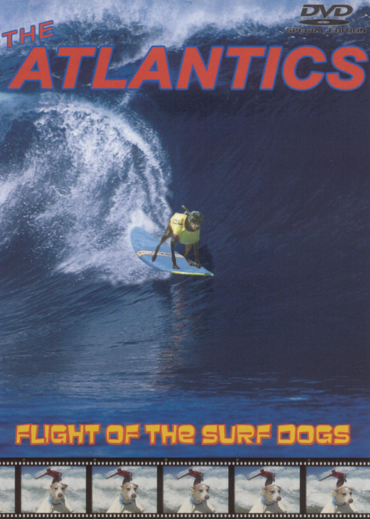 Flight of the Surf Dogs