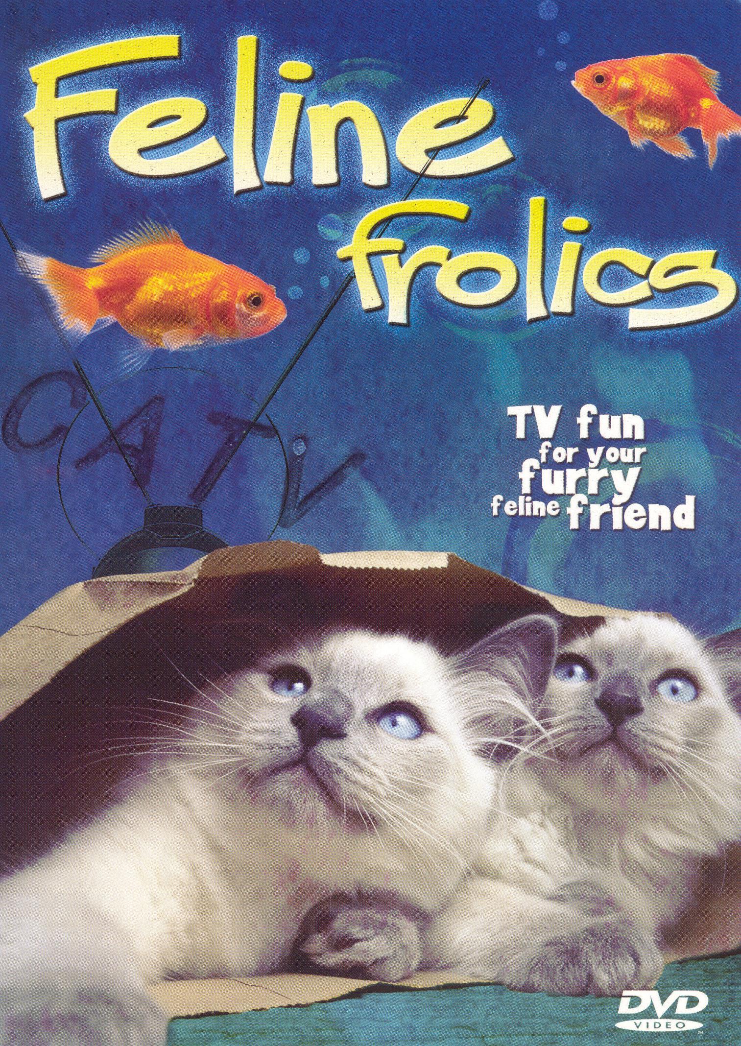 Feline Frolics