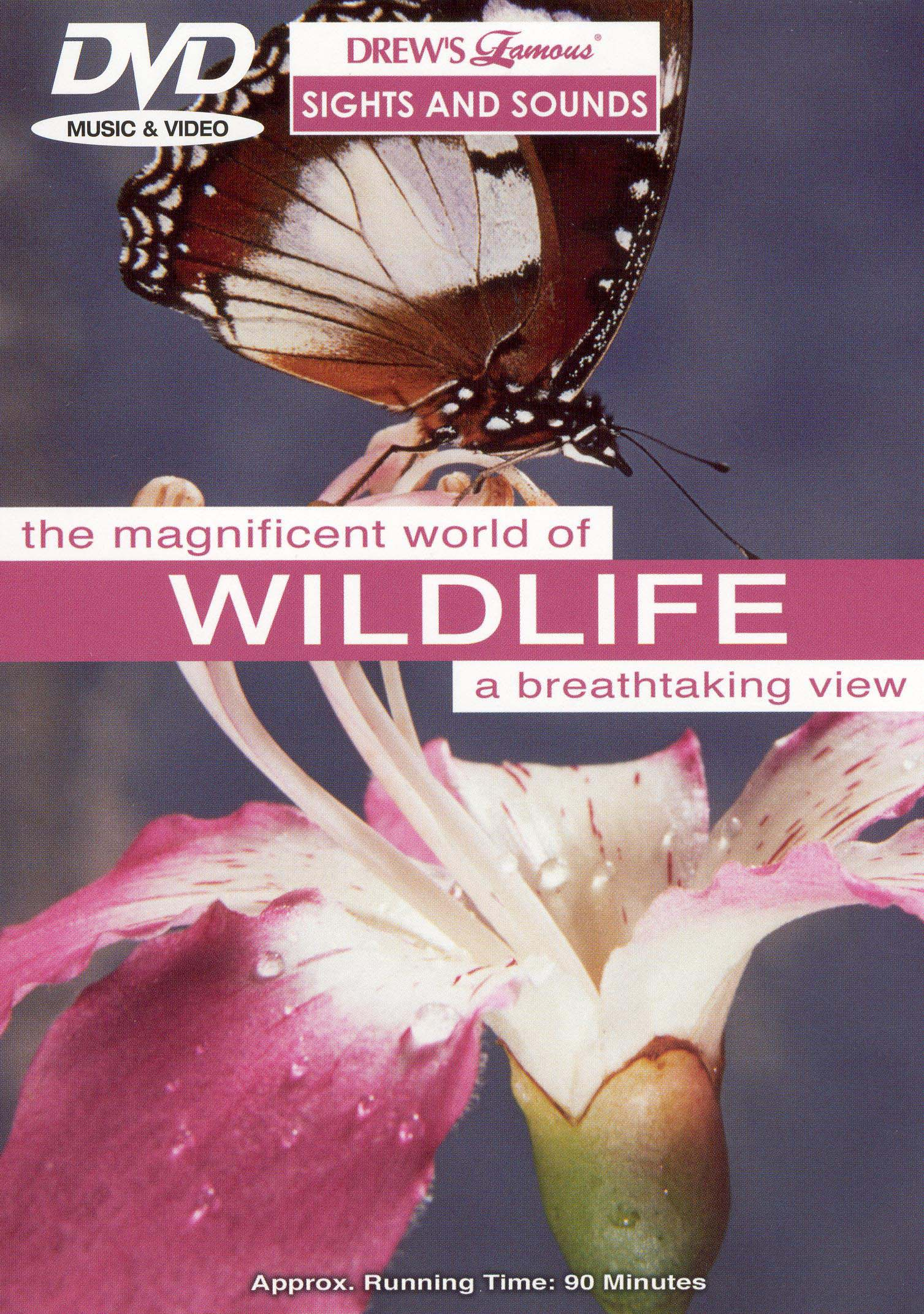 Drew's Famous Sights & Sounds: Wildlife
