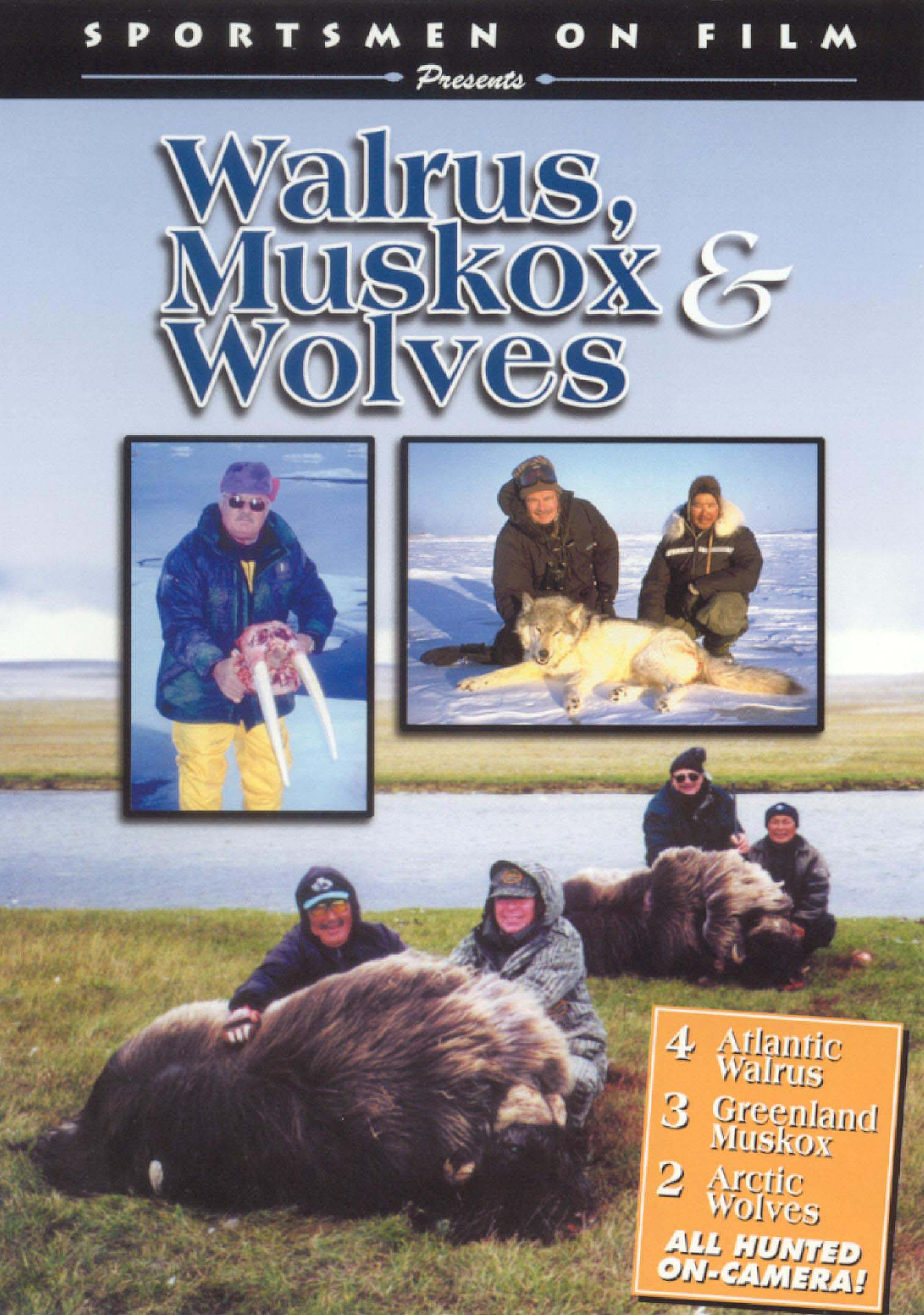 Walrus, Musk Ox and Wolves