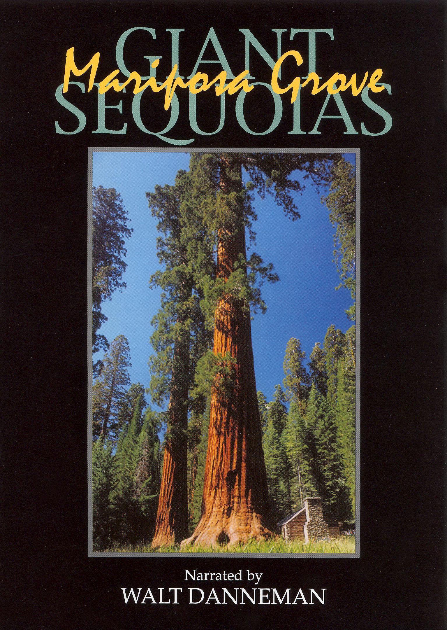 Giant Sequoias: Mariposa Grove