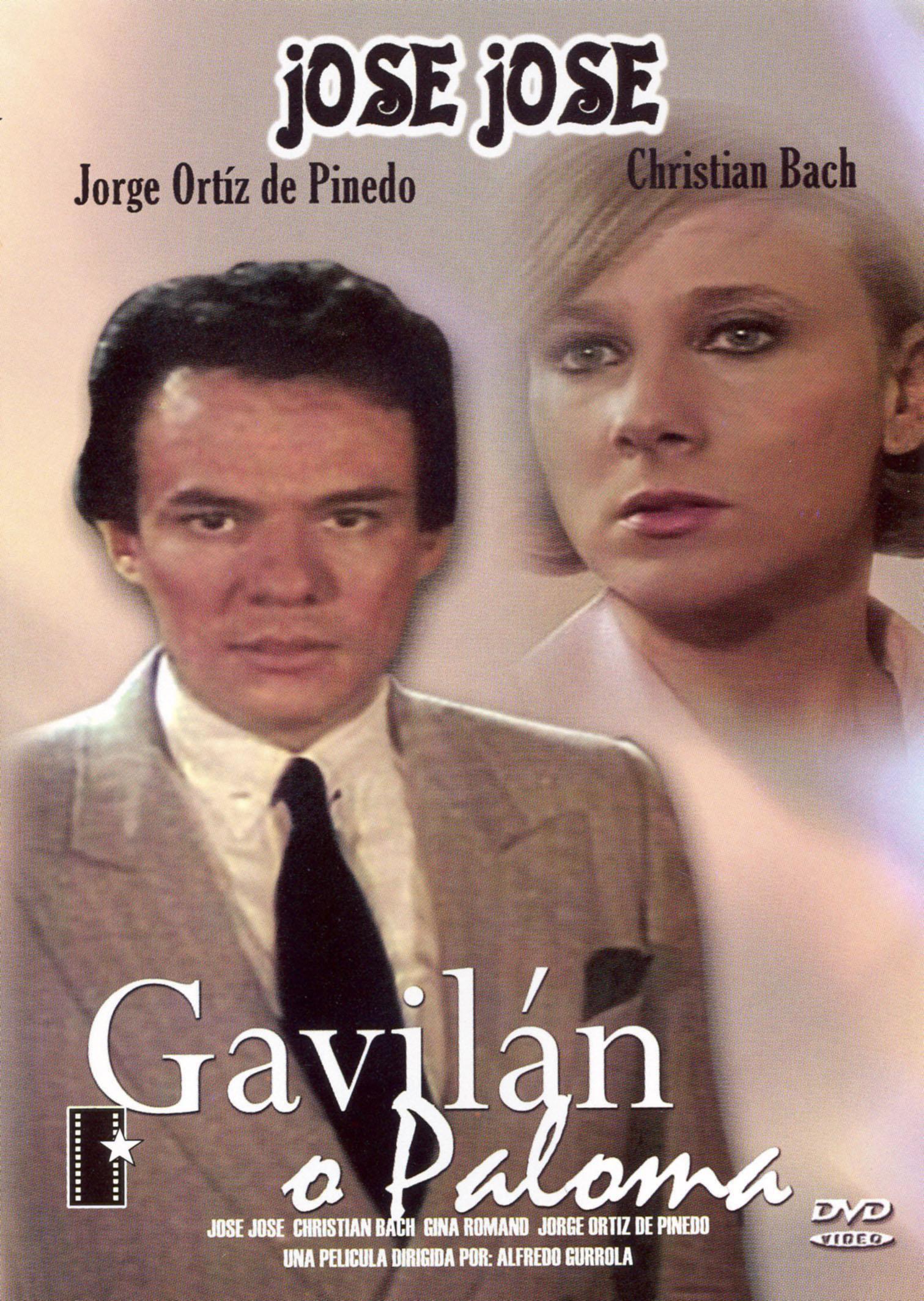 Gavilan O Paloma