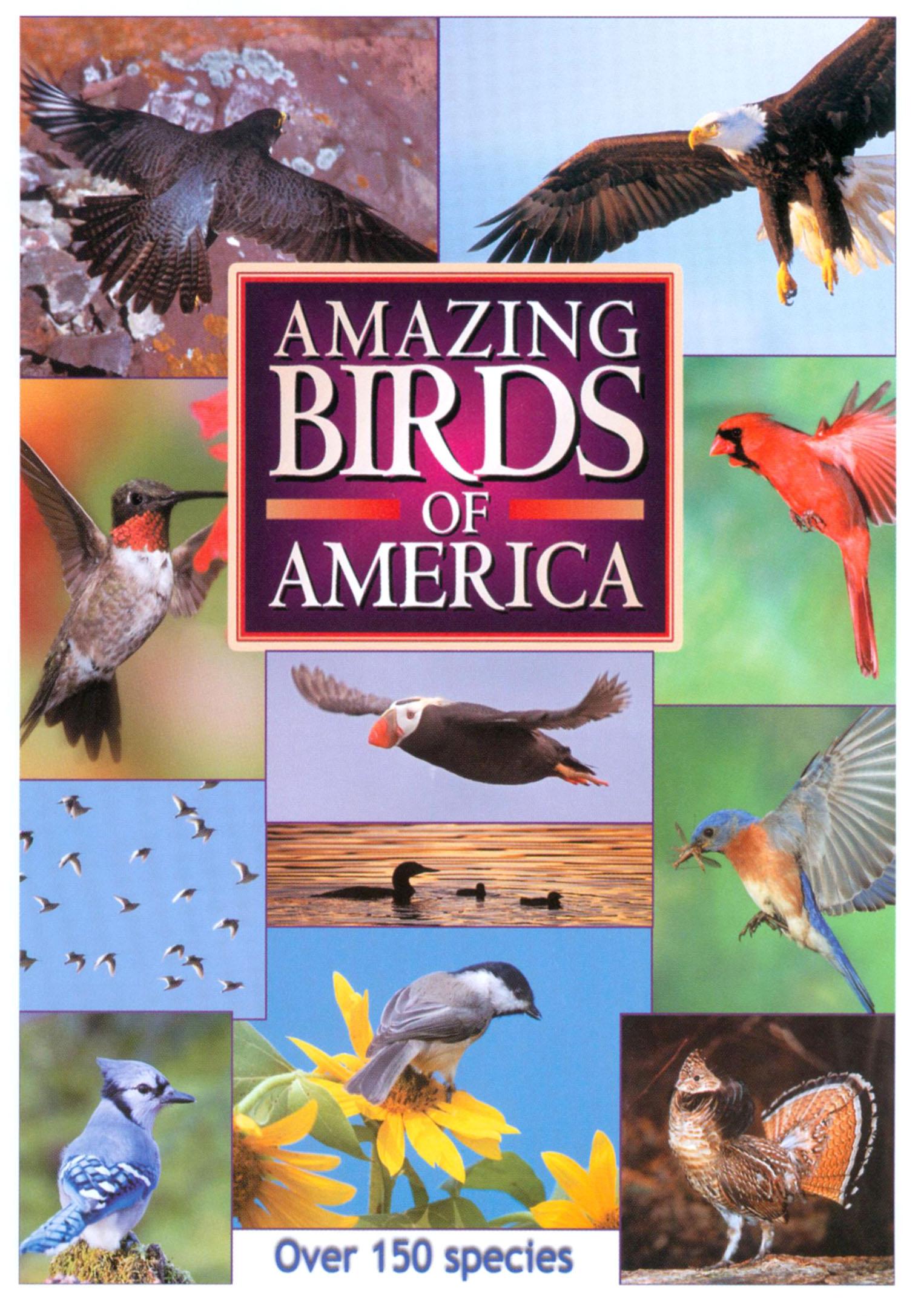 Amazing Birds of America