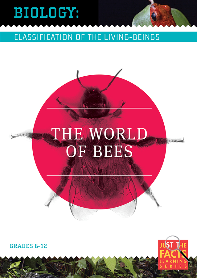 Biology Classification: The World of Bees