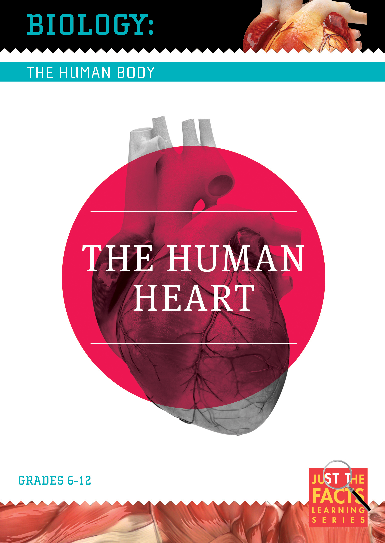 Biology of the Human Body: The Human Heart