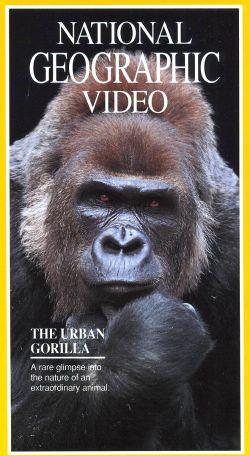 National Geographic: Urban Gorilla