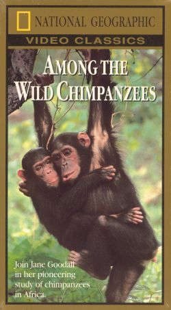 "review of among the wild chimpanzees Extra credit film review – chimpanzee ""among the wild chimpanzees,"" you should have an appreciation for the remarkable relationship that develops."