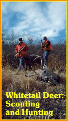Whitetail Deer: Scouting and Hunting