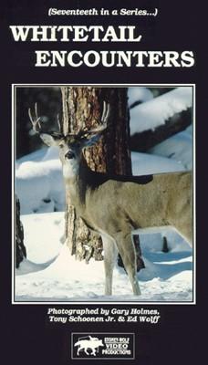 Whitetail Encounters