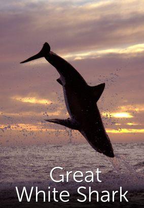 Great White Shark: A Living Legend