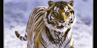 The Life of Mammals [TV Documentary Series]