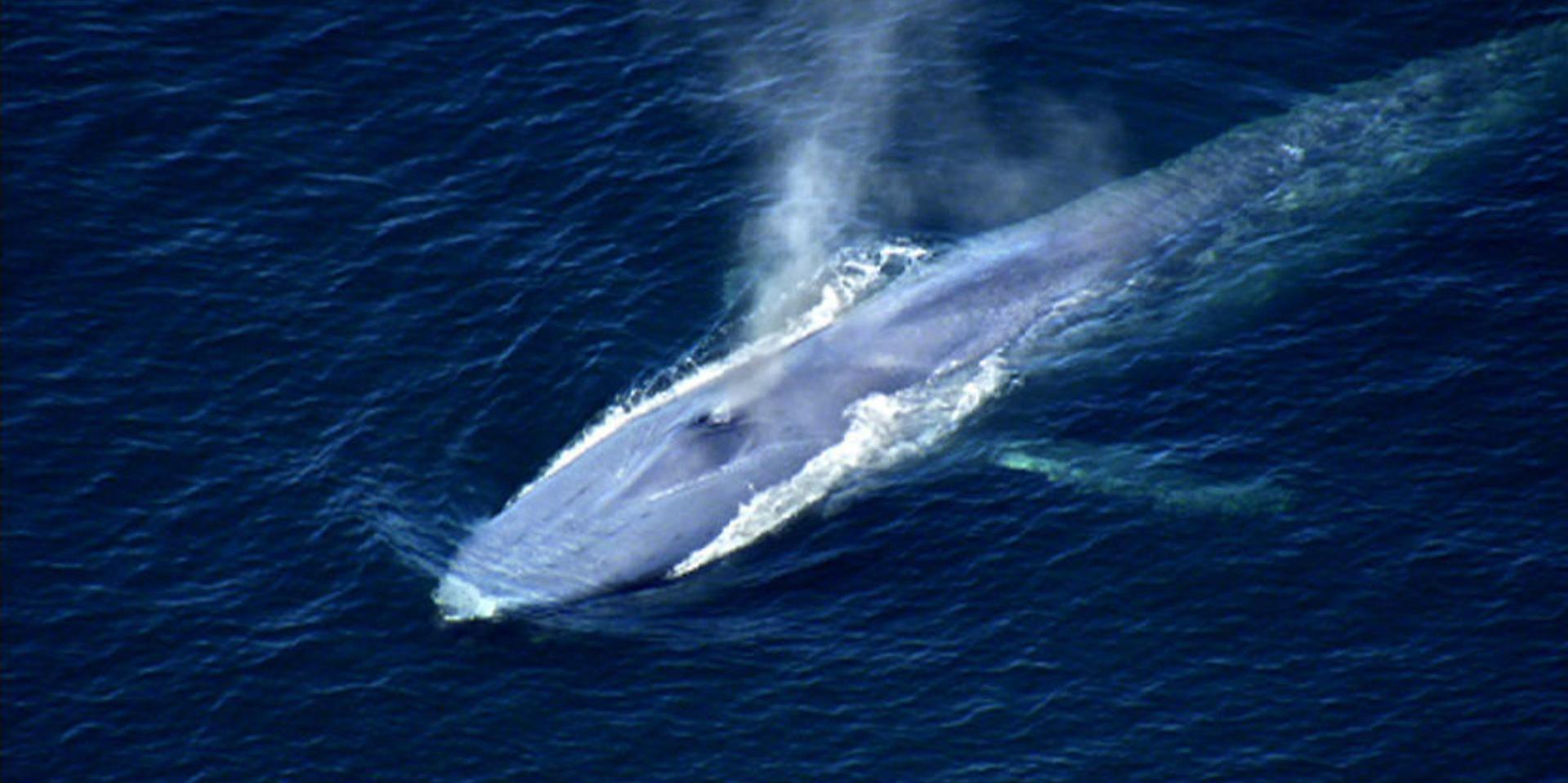 Ocean Giants: Giant Lives