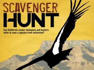 Scavenger Hunt: An Unlikely Union
