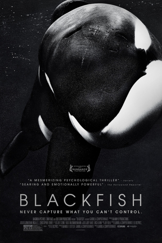 Blackfish / Magnolia Pictures &#59; CNN Films &#59; Our Turn Productions presents a film by Gabriela Cowperthwaite &#59; produced by Manny O Productio
