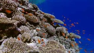 The Blue Planet: Seas of Life, Part 6 - Coral Seas