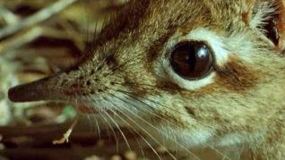 The Life of Mammals: Insect Hunters