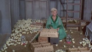 Green Acres: Everywhere a Chick Chick