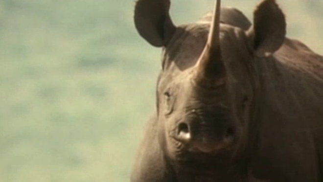 ABC World of Discovery: Rhino - Last Charge of the Rhino