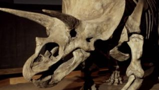 Dinosaurs: Inside and Out: Land of the Giants