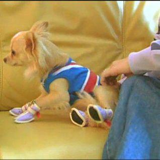 Dog Whisperer: Hank and Paris