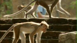 The Life of Mammals: Social Climbers