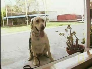 Dog Whisperer: Daisy and Sophie