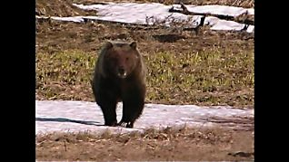 Nature: The Good, the Bad and the Grizzly