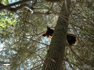 Nature: Animals Behaving Worse