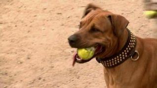 Dog Whisperer: Pups on Parole, Eton & Dolly