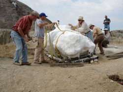 National Geographic: Dino Autopsy