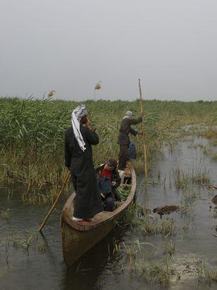 Diving into Noah's Flood