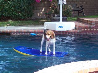 Dog Whisperer: Eppie, Lady and Snoopy