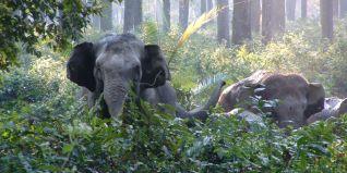 Elephant Rage
