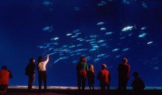 Nature: Oceans in Glass - Behind the Scenes of the Monterey Bay Aquarium