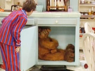 ALF: Shake, Rattle and Roll