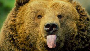 Nature: Animals Behaving Badly