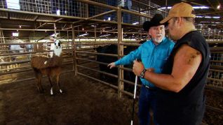Only in America With Larry the Cable Guy: Larry Beefs Up