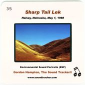 Sharp Tail Lek: Halsey, Nebraska, May 1, 1998