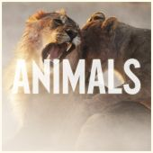 J. Cole, Maroon 5 - Animals [Remix]