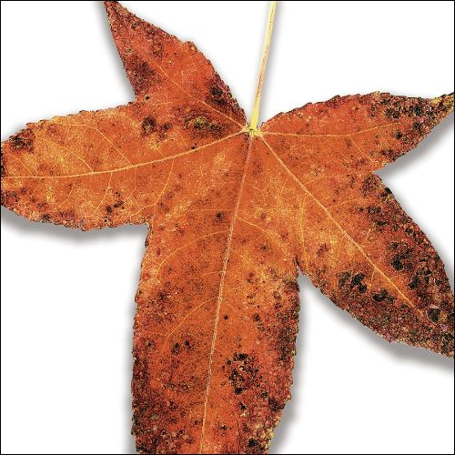 Leaves from the Tree: A Tribute to Peter Gabriel