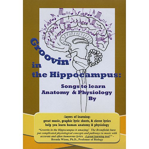 Groovin' in the Hippocampus