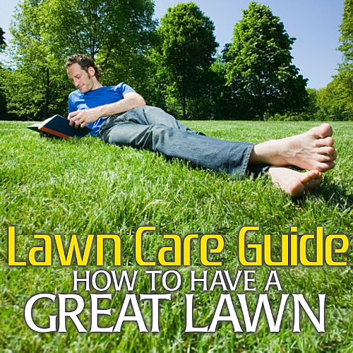 Lawn Care Guide: How to Have a Great Lawn