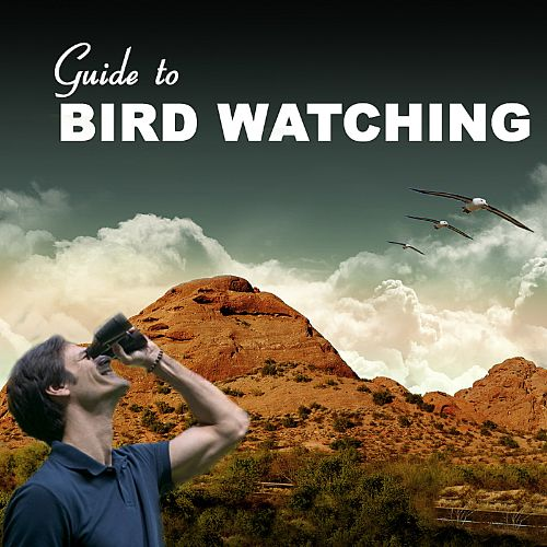 Guide to Birdwatching: Everything You Need to Know About Birds and Birdwatching