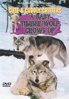 Cute and Cuddly Critters: A Baby Timber Wolf Grows
