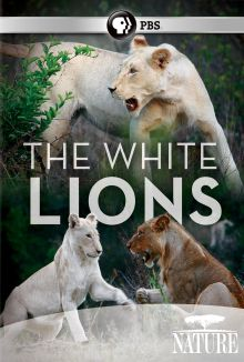 Nature : The White Lions
