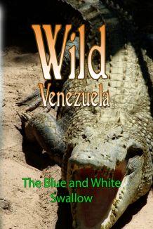 Wild Venezuela: The Blue and White Swallow