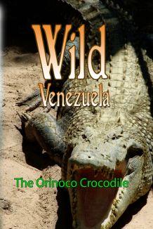 Wild Venezuela: The Orinoco Crocodile