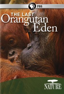 Nature : The Last Orangutan Eden