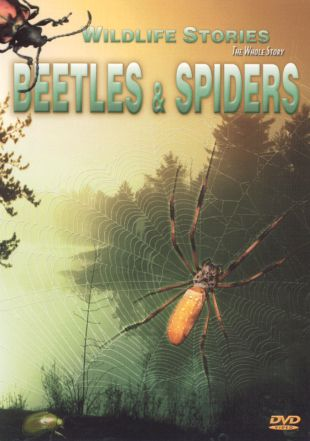 Wildlife Stories: The Whole Story - Beetles and Spiders